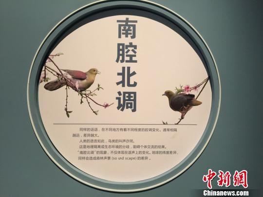 图为:�宴――鸟类鸣声行为展。 方�� 摄