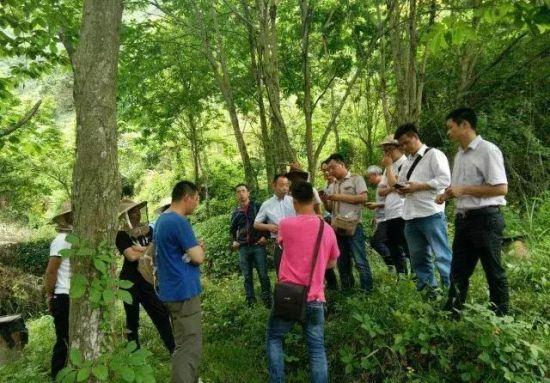 周建慧与村民们到实地一起探讨养蜂技术 莲都提供