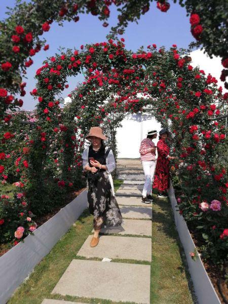 世界花园大会的花卉长廊 胡丰盛摄