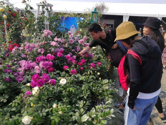 游客们在评论自己喜欢的花卉 胡丰盛摄