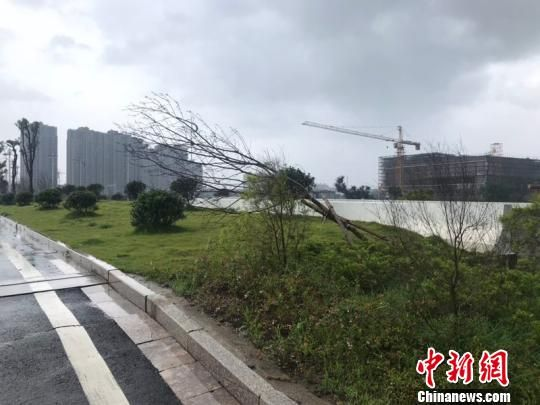 浙江温州苍南大道路边倒塌的树枝。 胡哲斐 摄